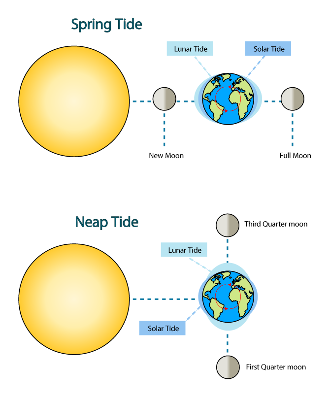Tides th grade science. Waves clipart tide