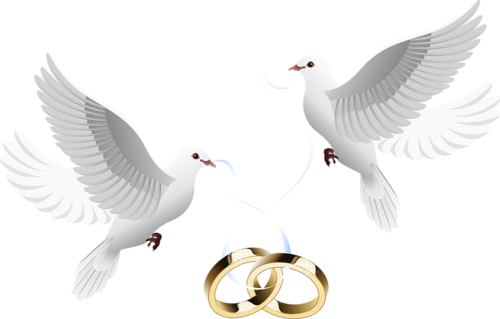 Wedding png images. Free download