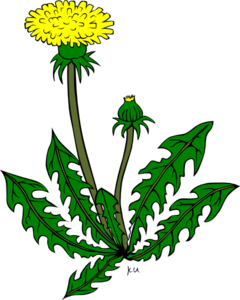 Free cliparts download clip. Weeds clipart