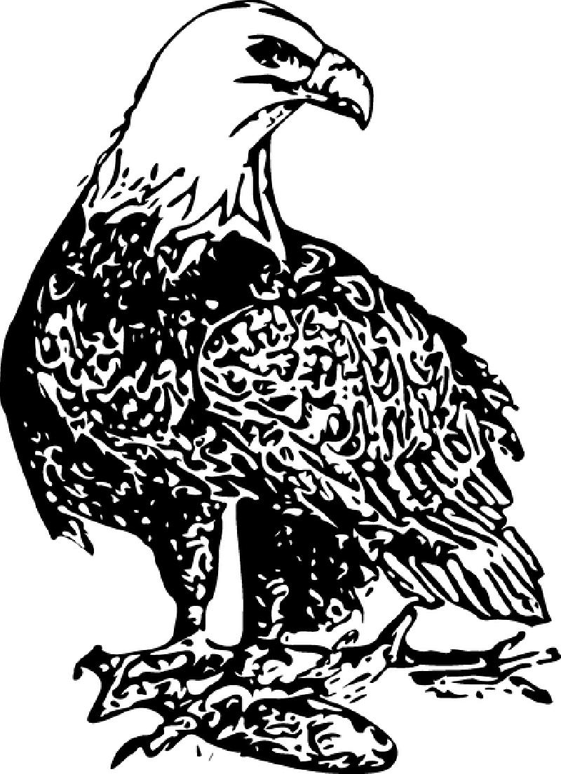 Weight clipart 1 kg. Philippine eagle crazywidow info