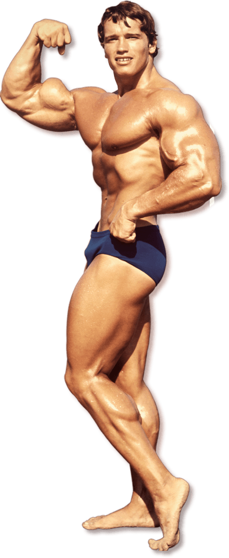 Bodybuilding png file mart. Weight clipart body building
