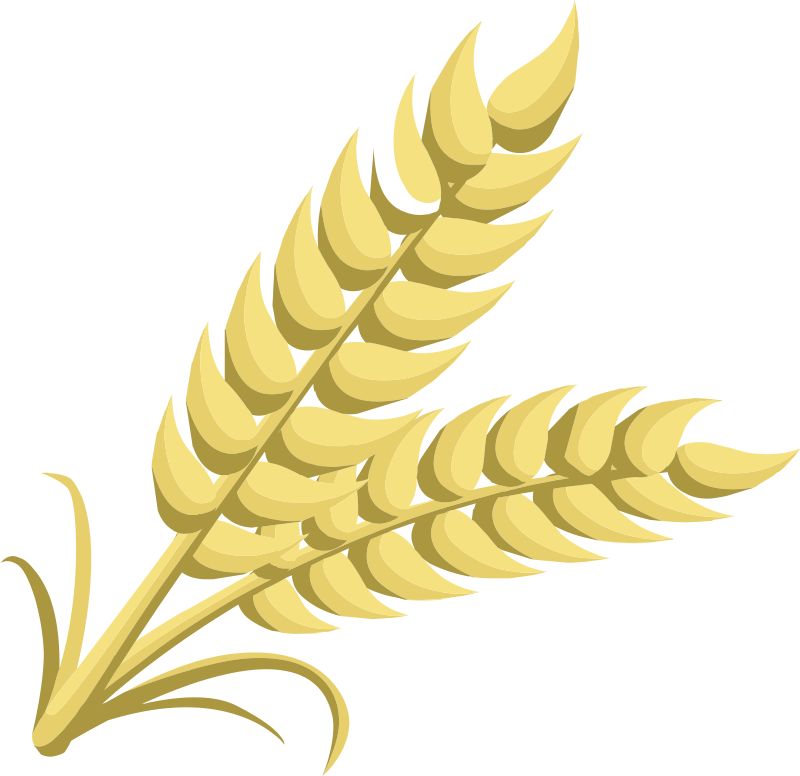Dividers free . Wheat clipart