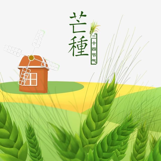 Wheat clipart artistic. Green view grassland windmill