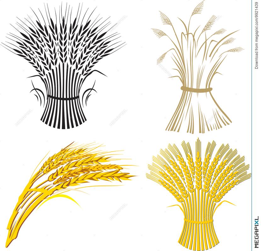 Four sheaf illustration megapixl. Wheat clipart artistic