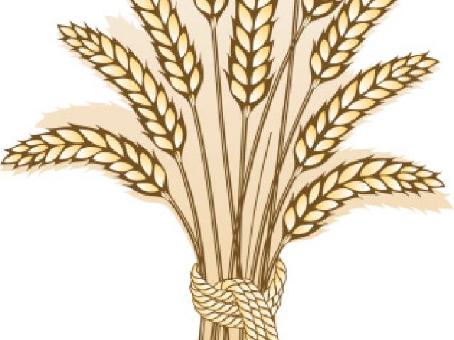 Free download clip art. Wheat clipart artistic