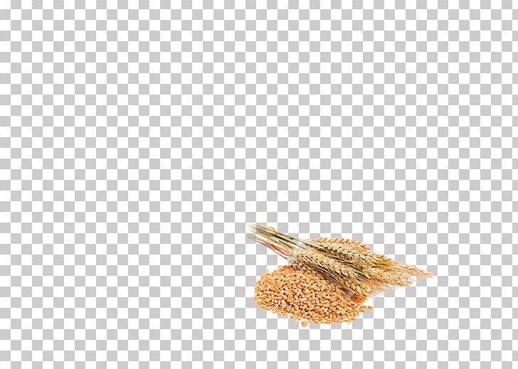 Wheat clipart baisakhi. Whole grain vaisakhi rusk