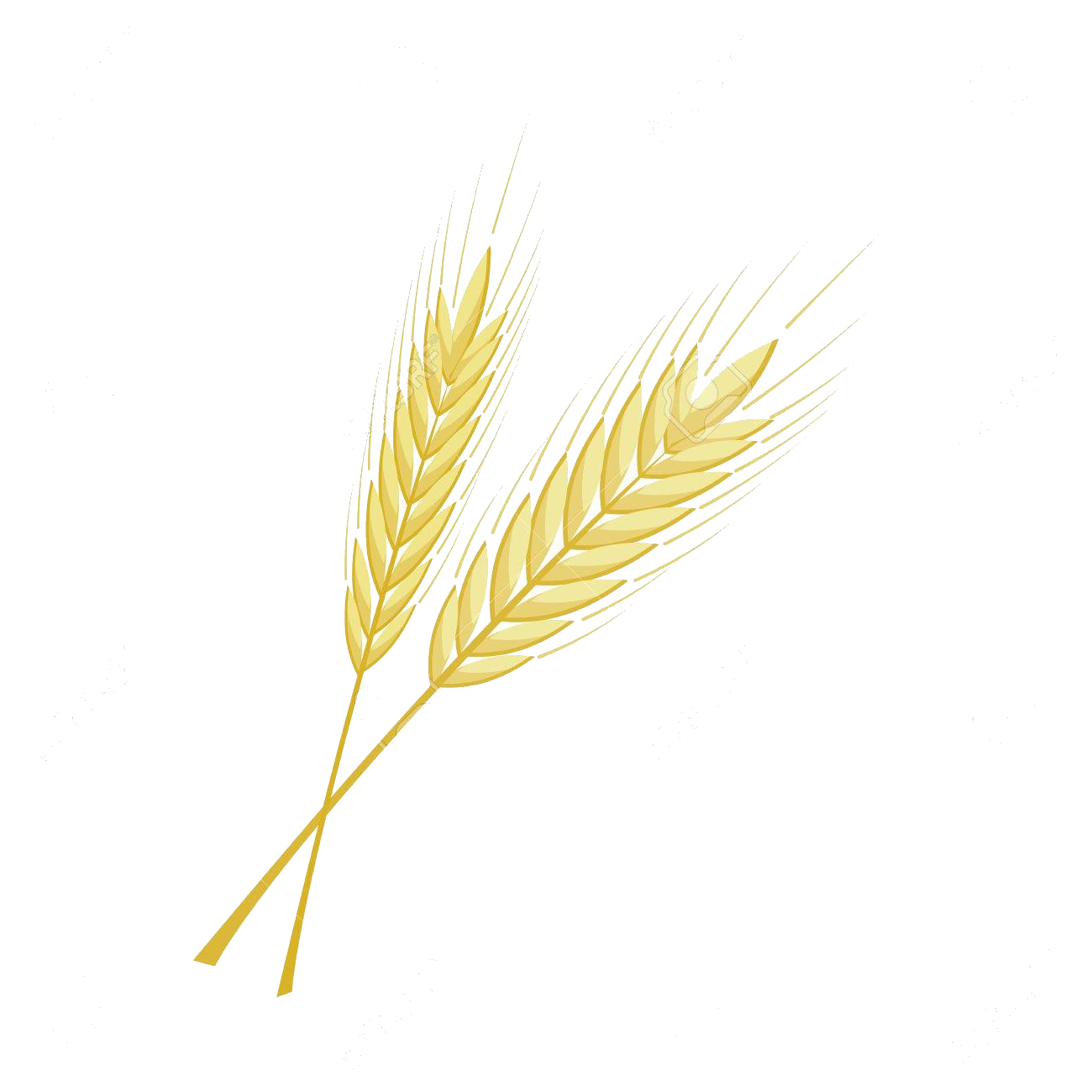 Bunch free on transparent. Wheat clipart barley