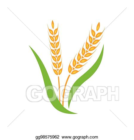 Wheat clipart barley. Vector spike yellow isolated
