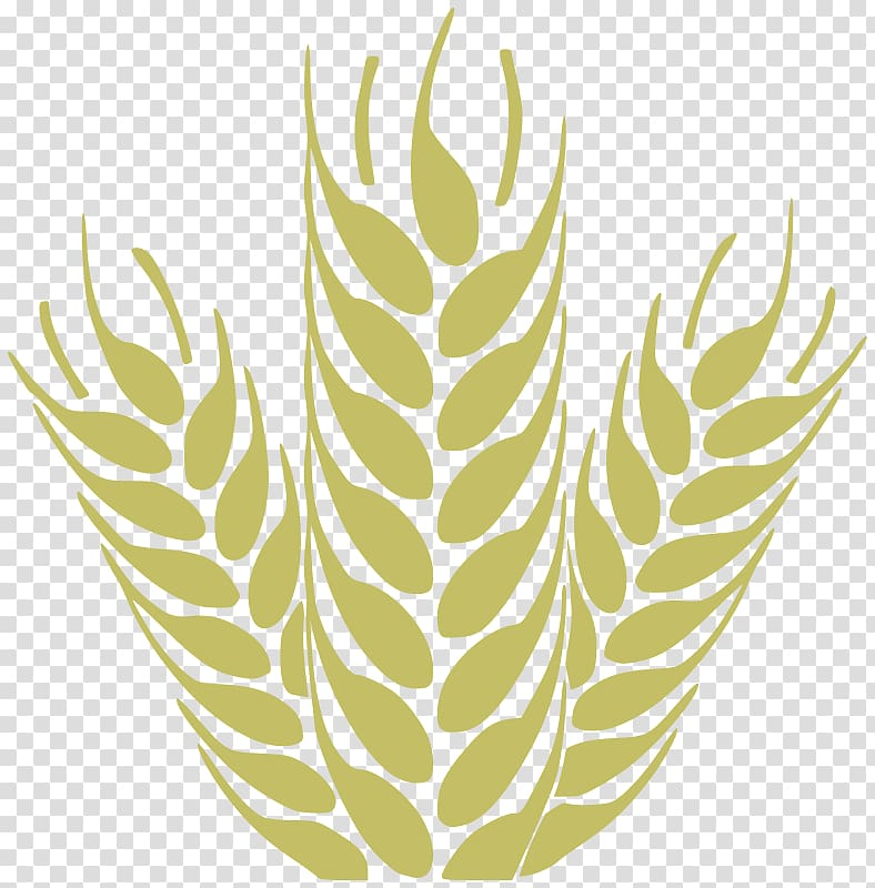 Grain transparent background png. Wheat clipart beer wheat