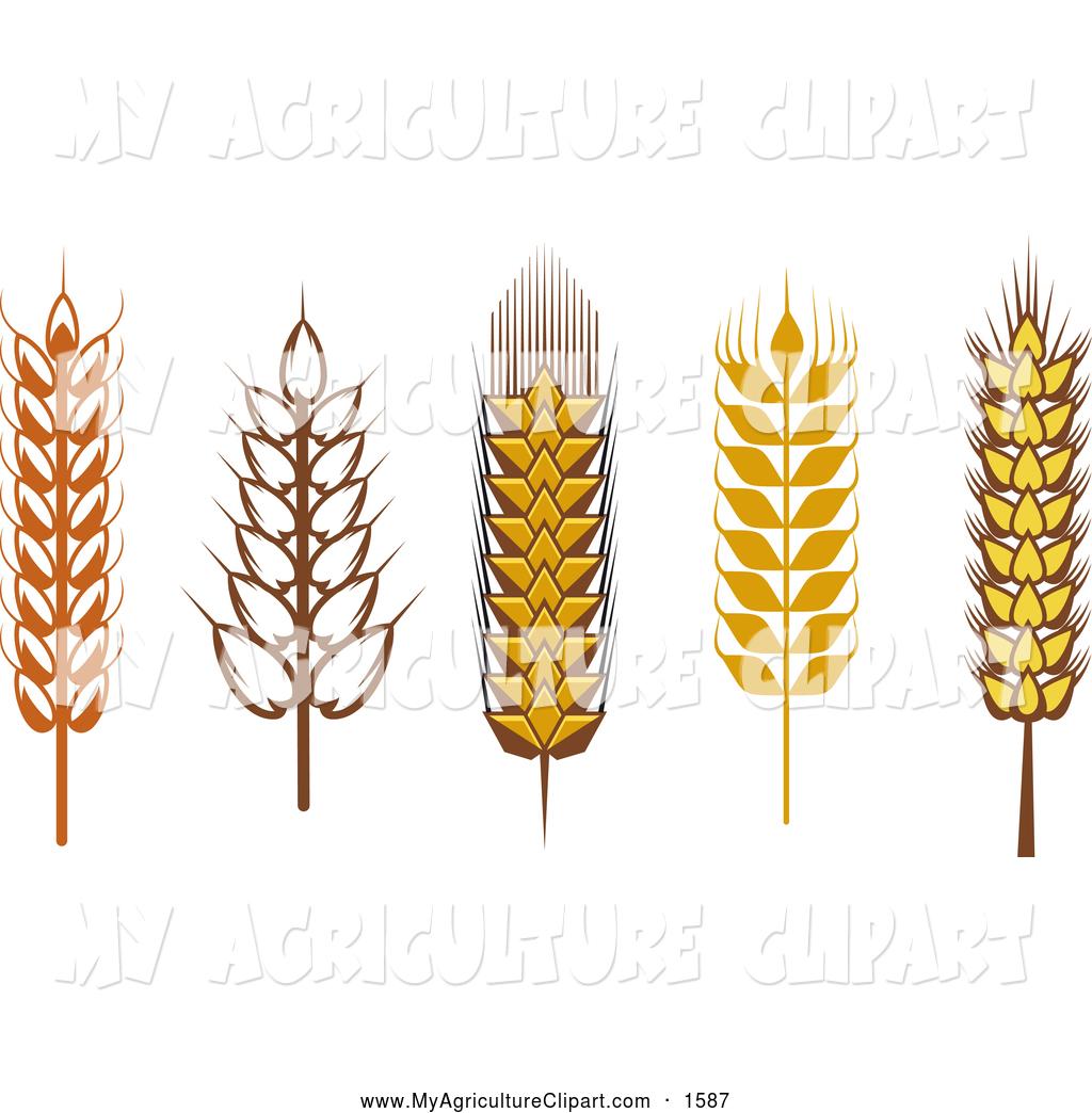 Wheat clipart beer wheat. Grain x free clip