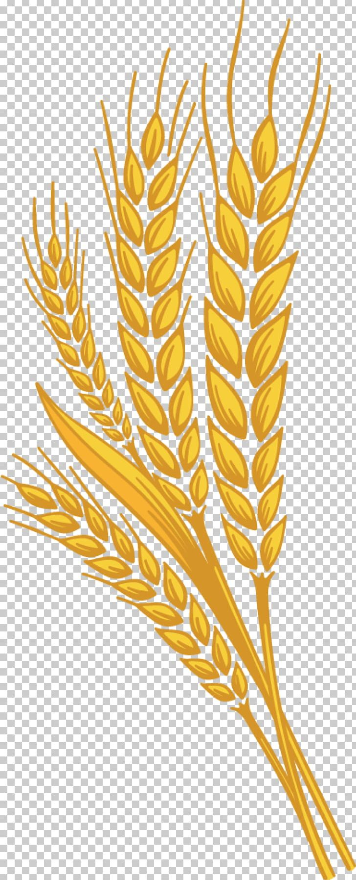 Beer png adobe acrobat. Wheat clipart branch
