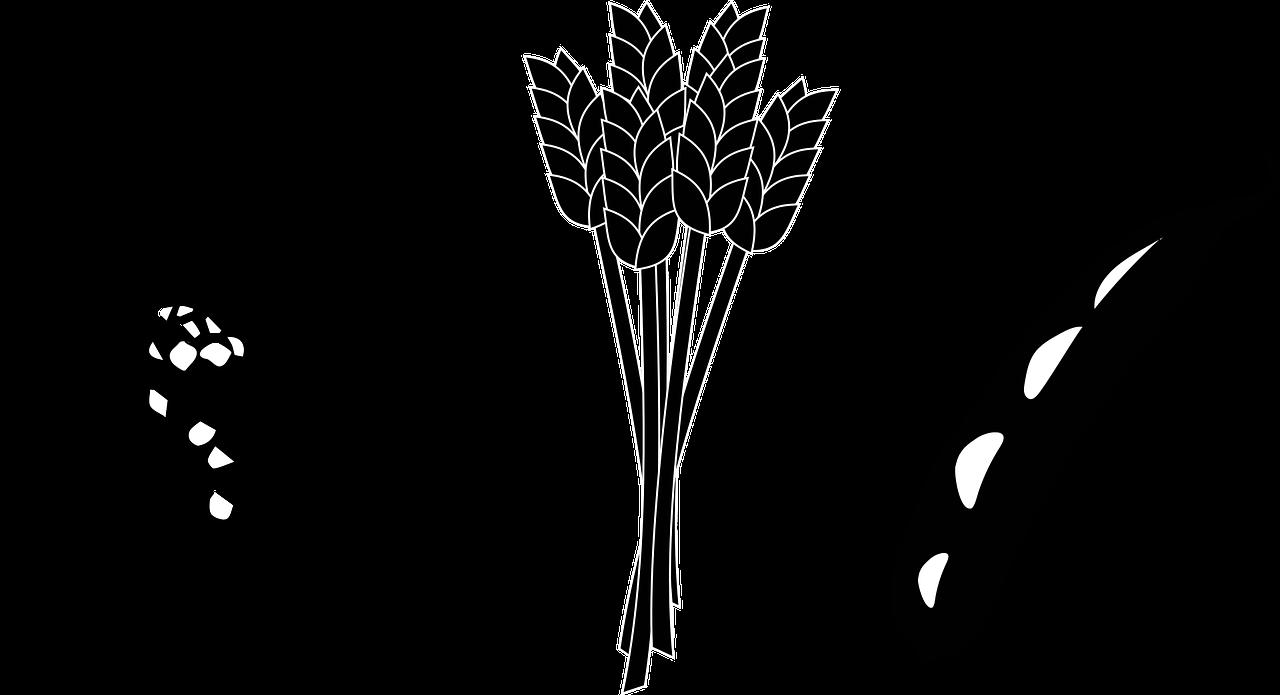 Wheat clipart bushel wheat. Wiklund trading llc