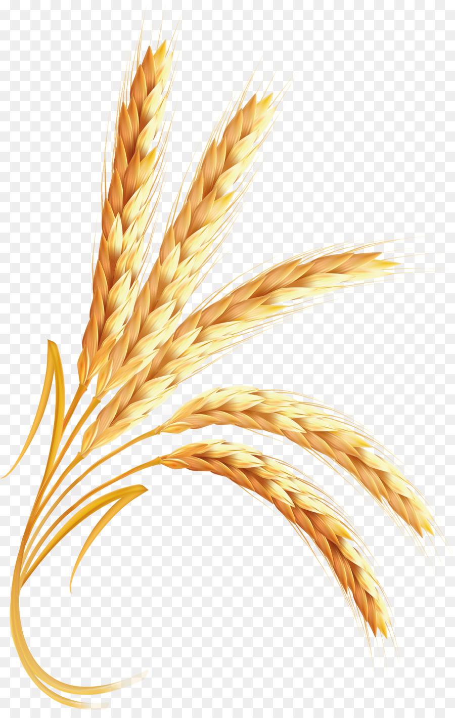 Food transparent clip art. Wheat clipart cartoon