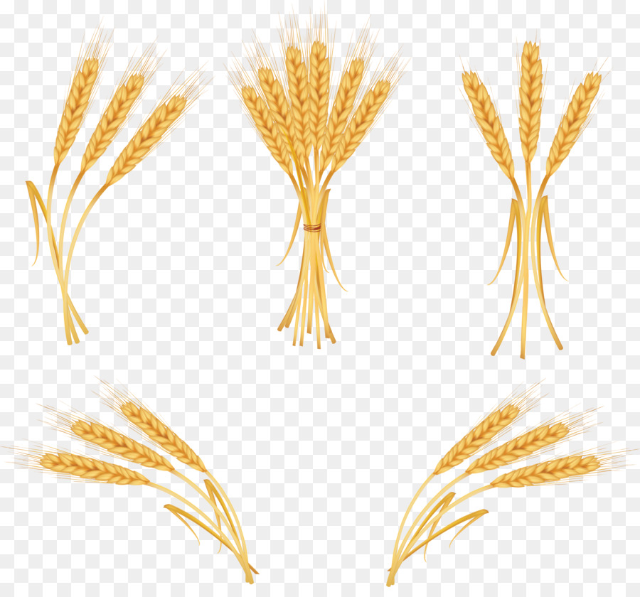 Wheat clipart cartoon. Illustration line