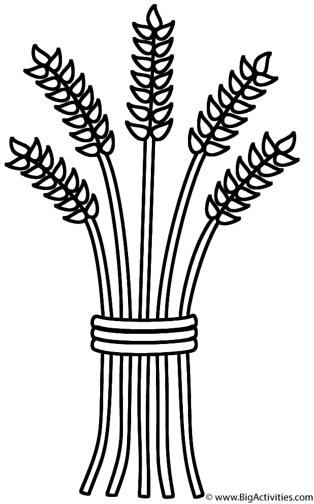Sheaf coloring thanksgiving . Wheat clipart colouring page