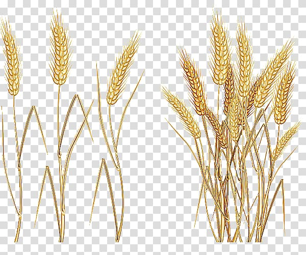 Wheat clipart ear wheat. Illustration common cereal
