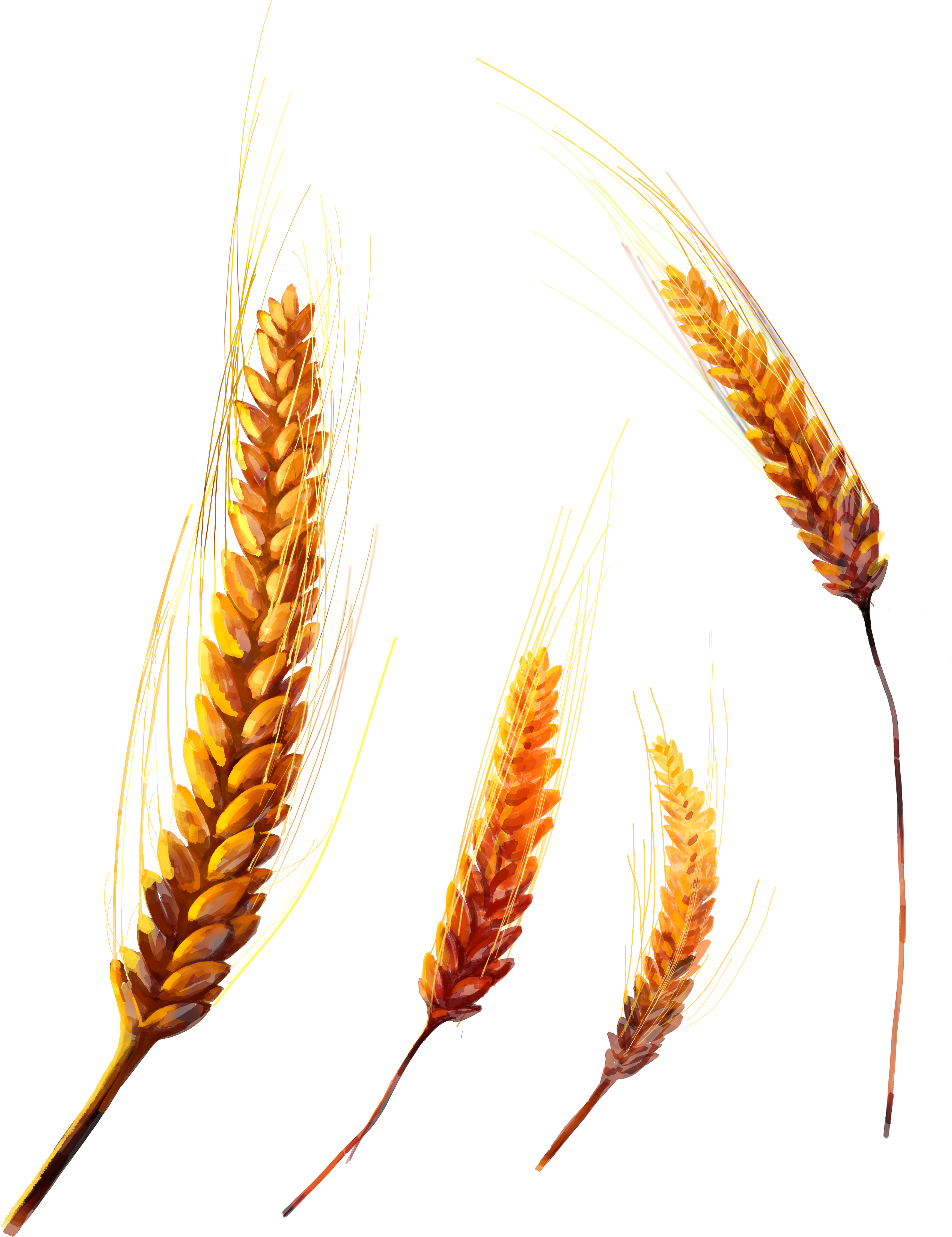 Wheat clipart feather. Png image purepng free