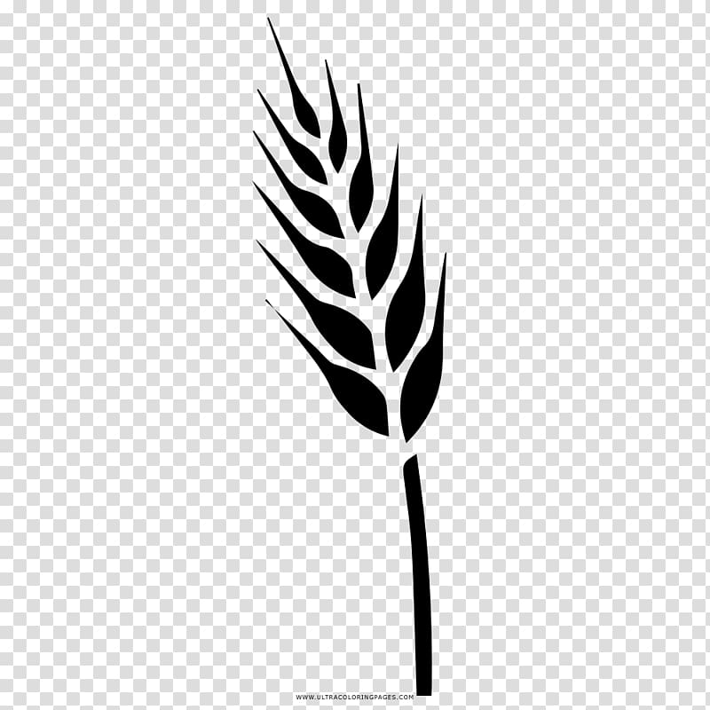 Wheat clipart food grain. Drawing triticale coloring book