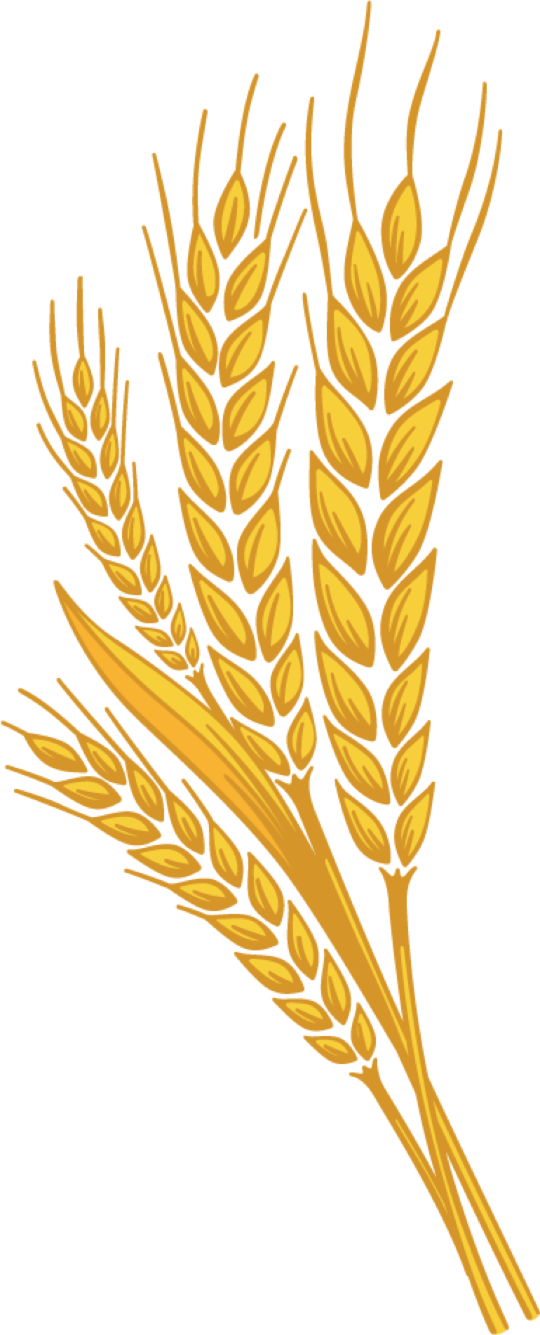 Wheat clipart gold paisley. Stem free on dumielauxepices