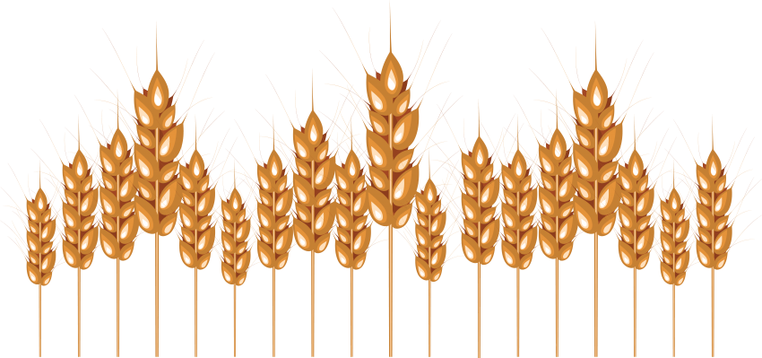 Wheat clipart gold wheat. Png free images toppng