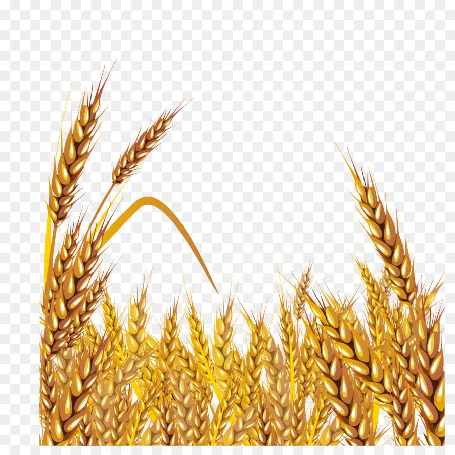 Wheat clipart gold wheat. Cartoon food grass transparent