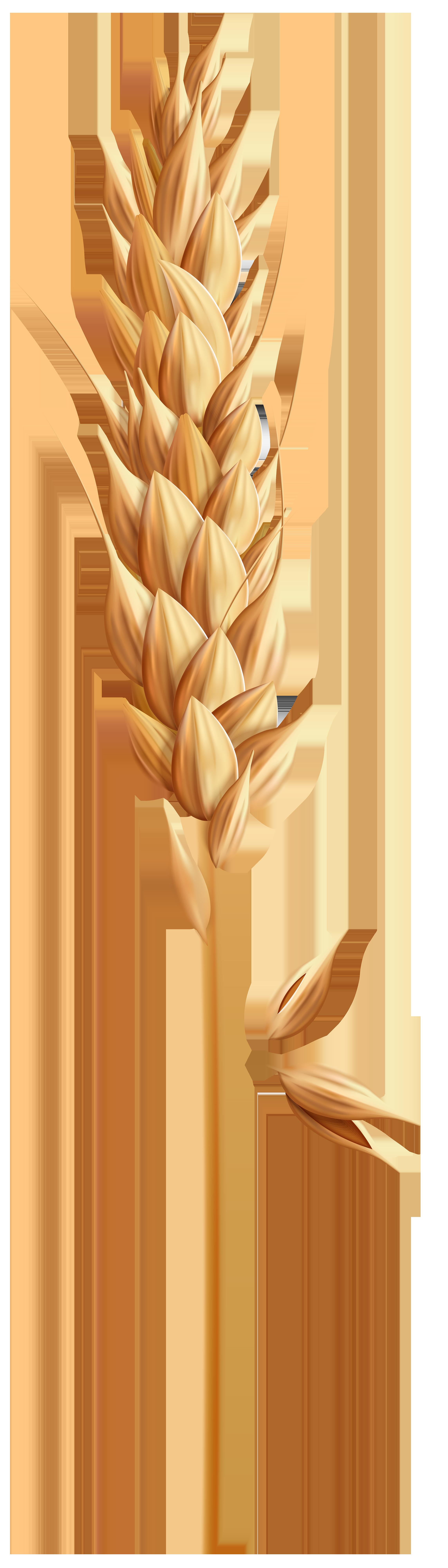 Wheat clipart grain. Png clip art image