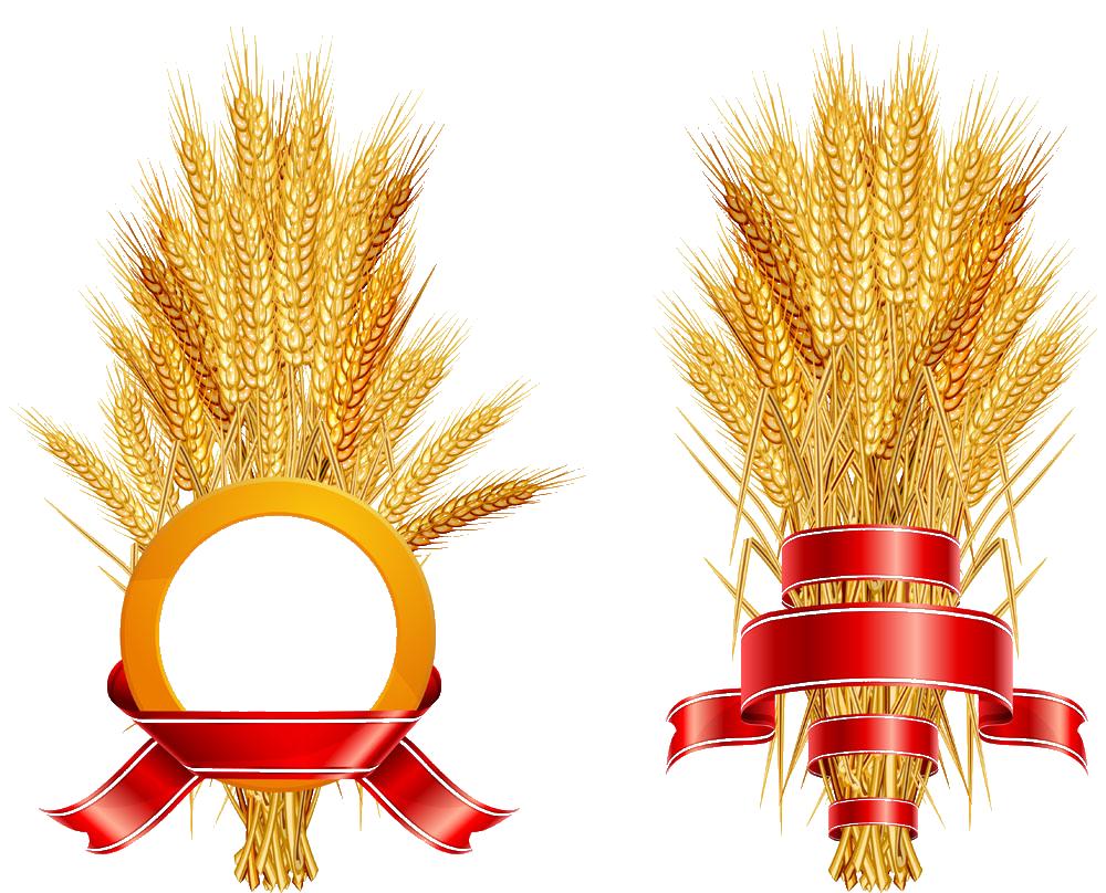 Wheat clipart grain bag. Common logo ear rice
