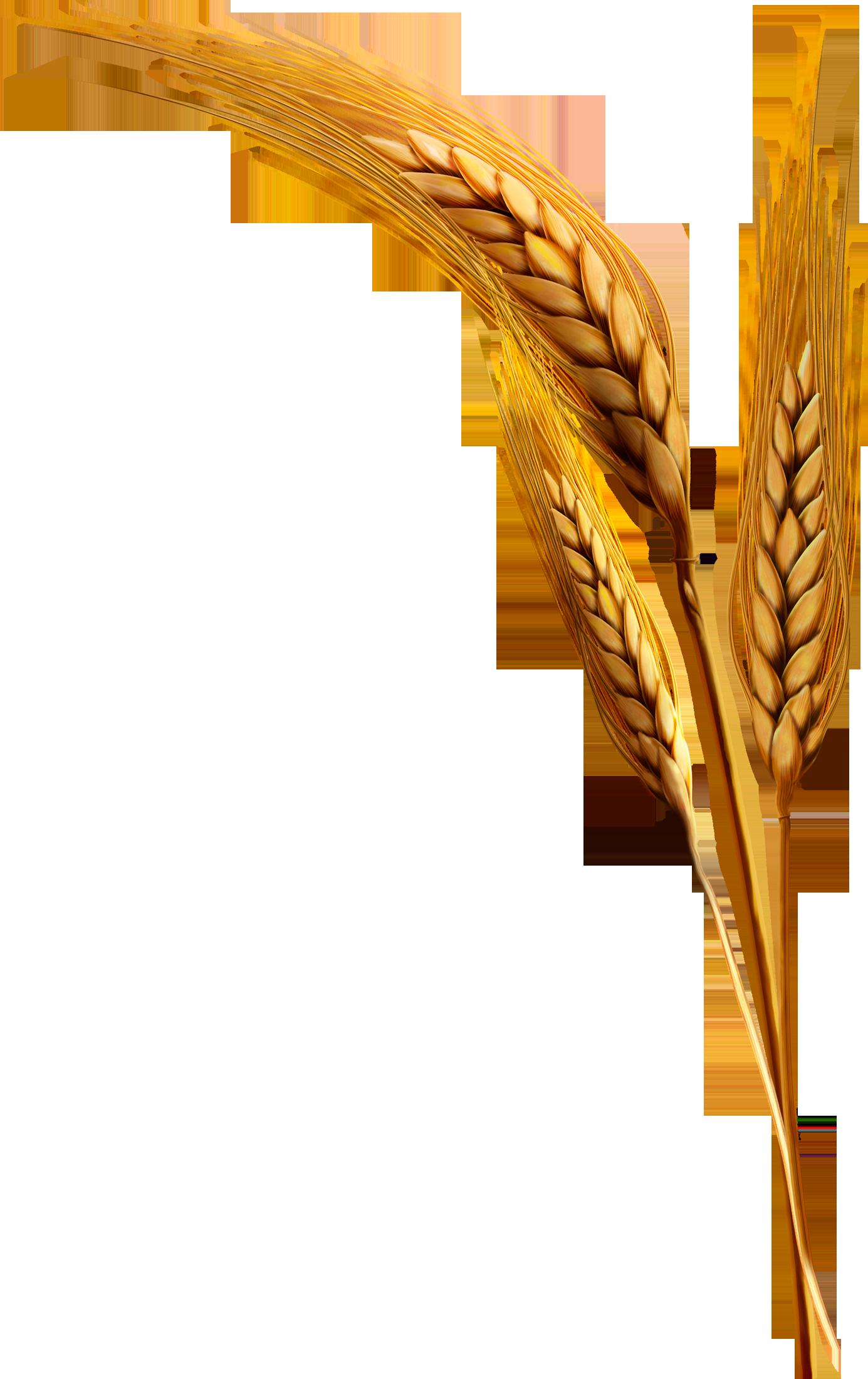 Emmer rice clip art. Wheat clipart grain bag