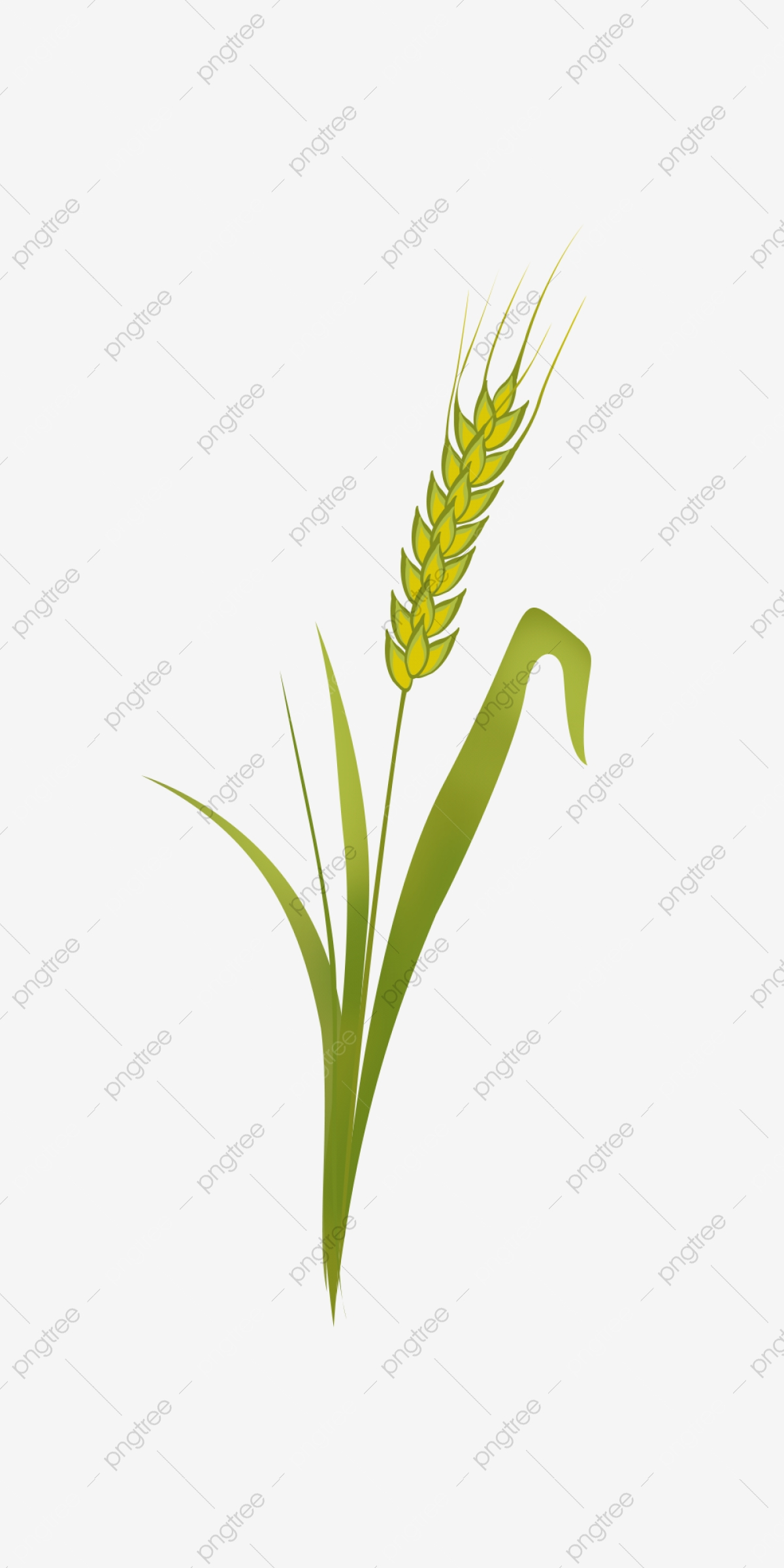 Wheat clipart green. Seedling ears cereals plant