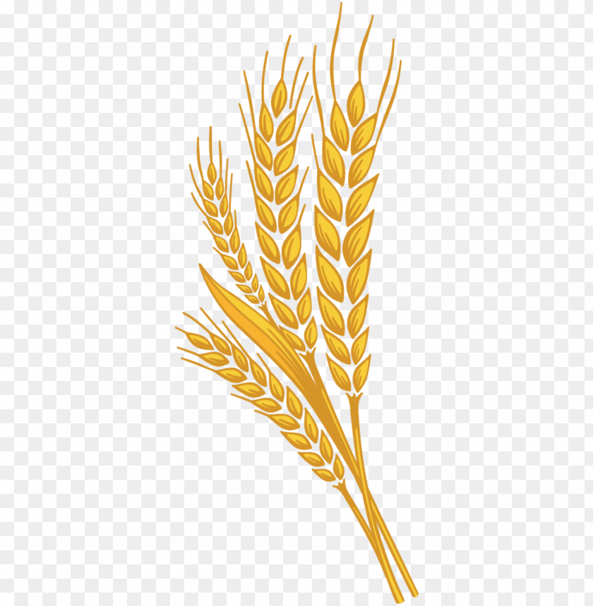 Download png photo toppng. Wheat clipart high resolution