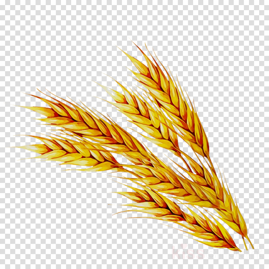 Wheat clipart jpeg, Wheat jpeg Transparent FREE for download on WebStockReview 2020