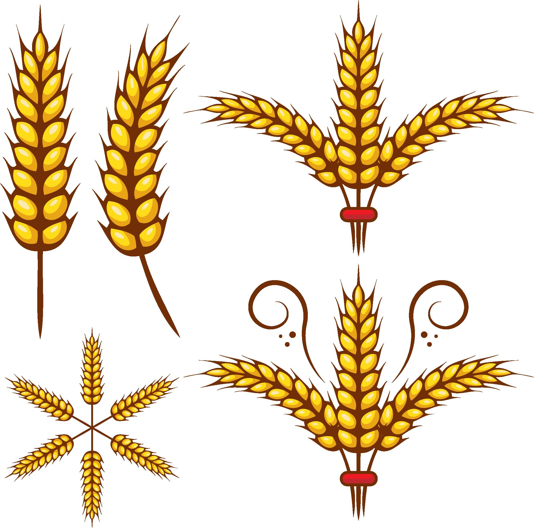 Grains leaf free on. Wheat clipart jpeg