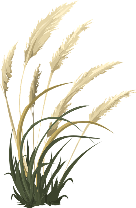 Collection of flower cliparts. Wheat clipart jpeg