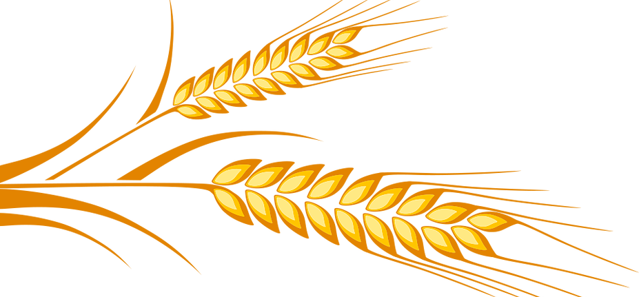 Wheat clipart line art. Fisher river ec dev