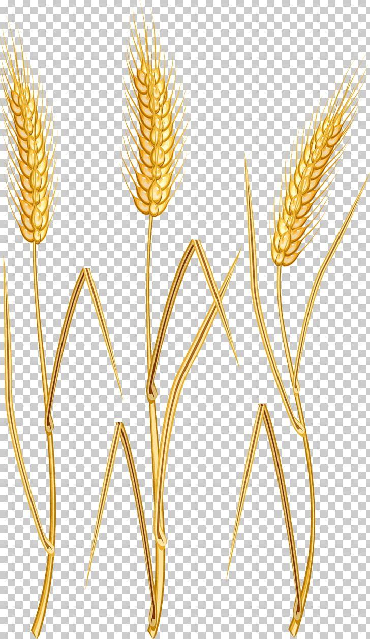 Wheat clipart oat. Png barley boy cartoon