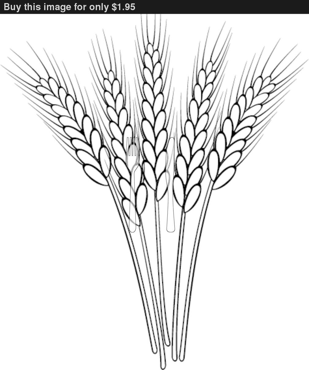Wheat clipart outline. Pin on elementary education