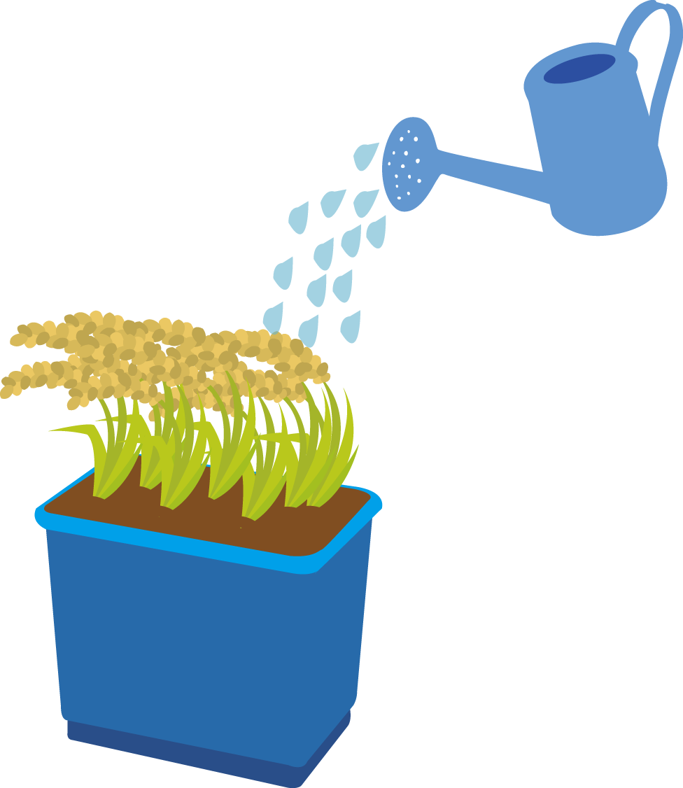 Growing rice can also. Wheat clipart paddy