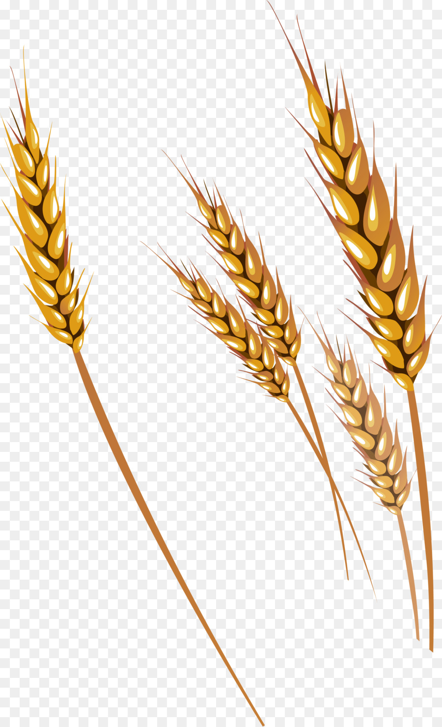 Wheat clipart piece wheat. Cartoon graphics plant transparent