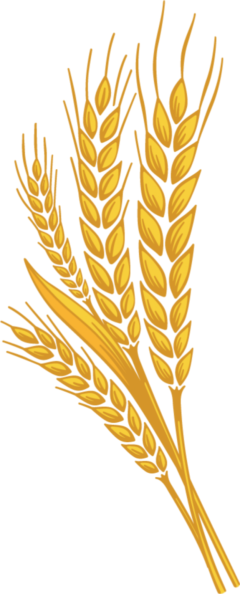 Png free images toppng. Wheat clipart piece wheat