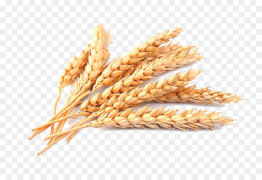 Cartoon food transparent clip. Wheat clipart rice grain