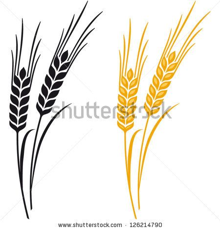 Free download best on. Wheat clipart rye
