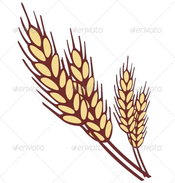 Ear graphicriver shapes vector. Wheat clipart simple