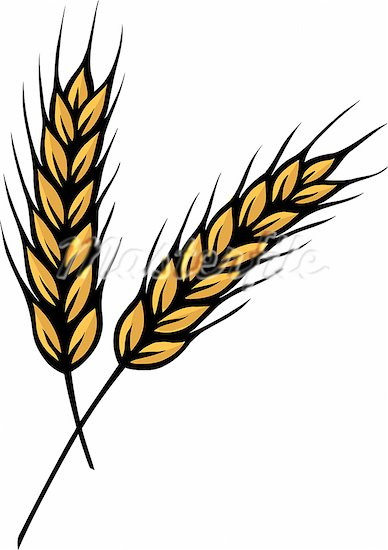 Wheat clipart strand. Grain free download best