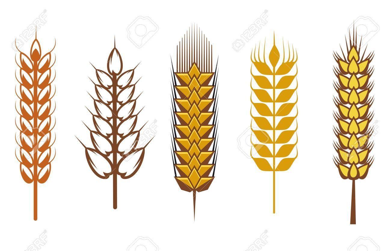 Stock vector tovagliette tattoo. Wheat clipart symbolism