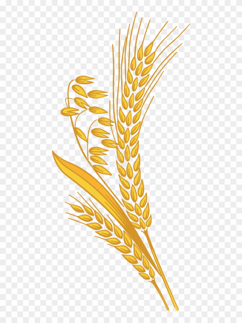 Wheat clipart transparent background. Free png download images