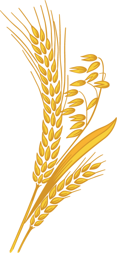 Wheat clipart transparent background. Png free images toppng
