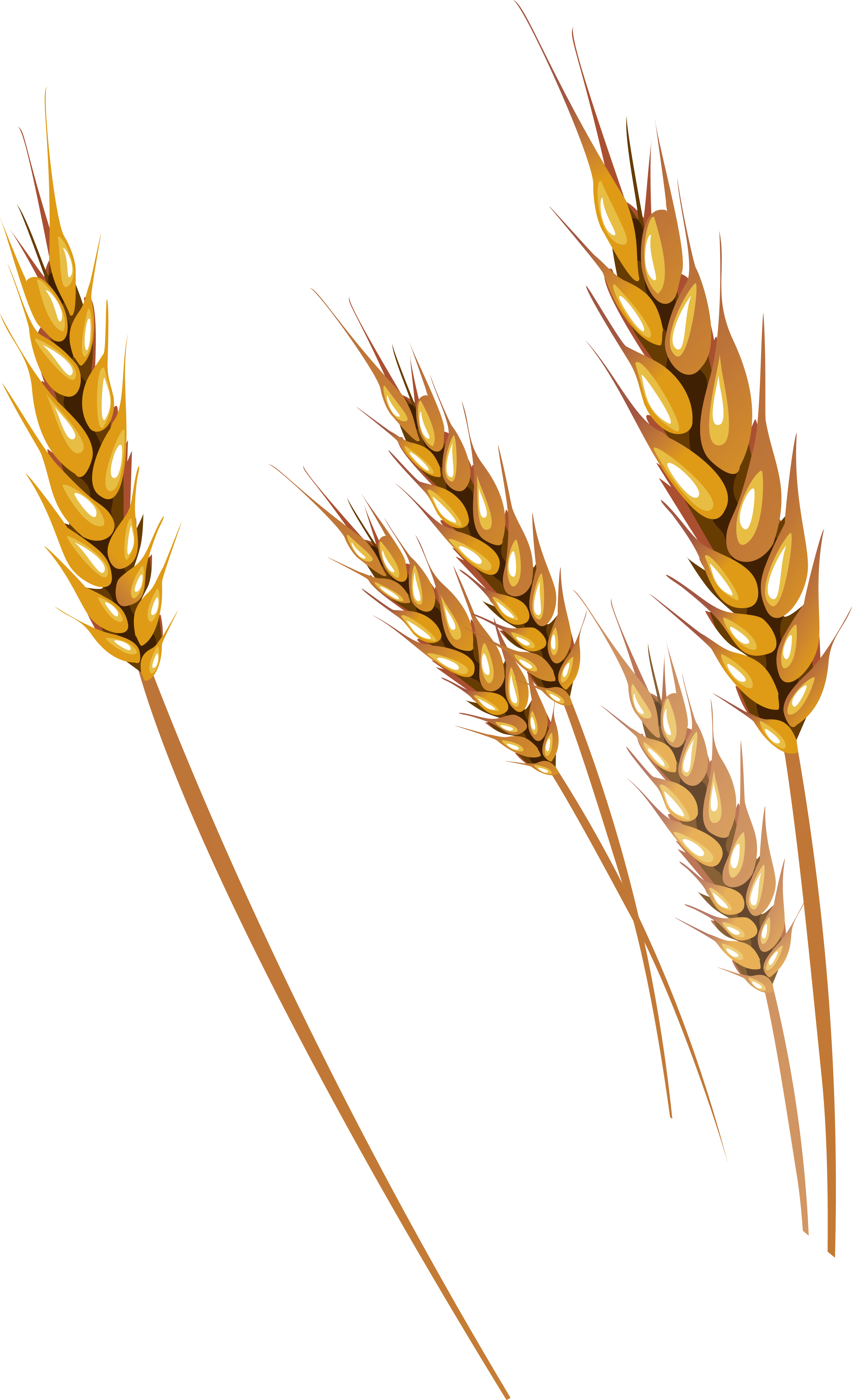 Png image purepng free. Wheat clipart transparent background