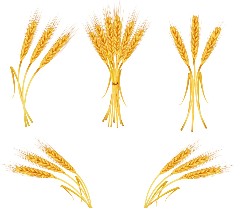 Wheat clipart vector. Free download clip art
