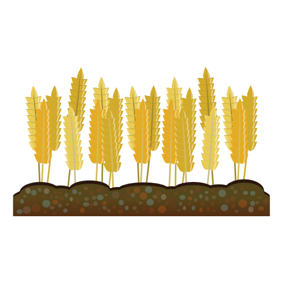Clipartist net clip art. Wheat clipart vector