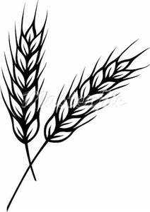 Free stalk images at. Wheat clipart vector